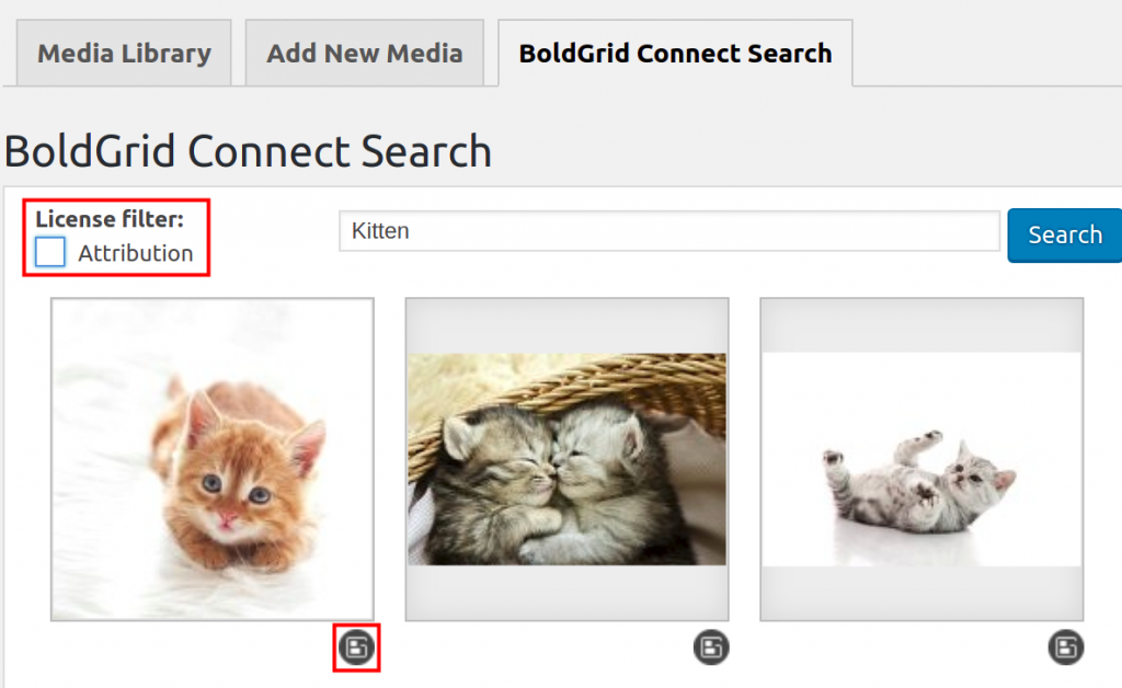 Searching for licensed images of a kitten